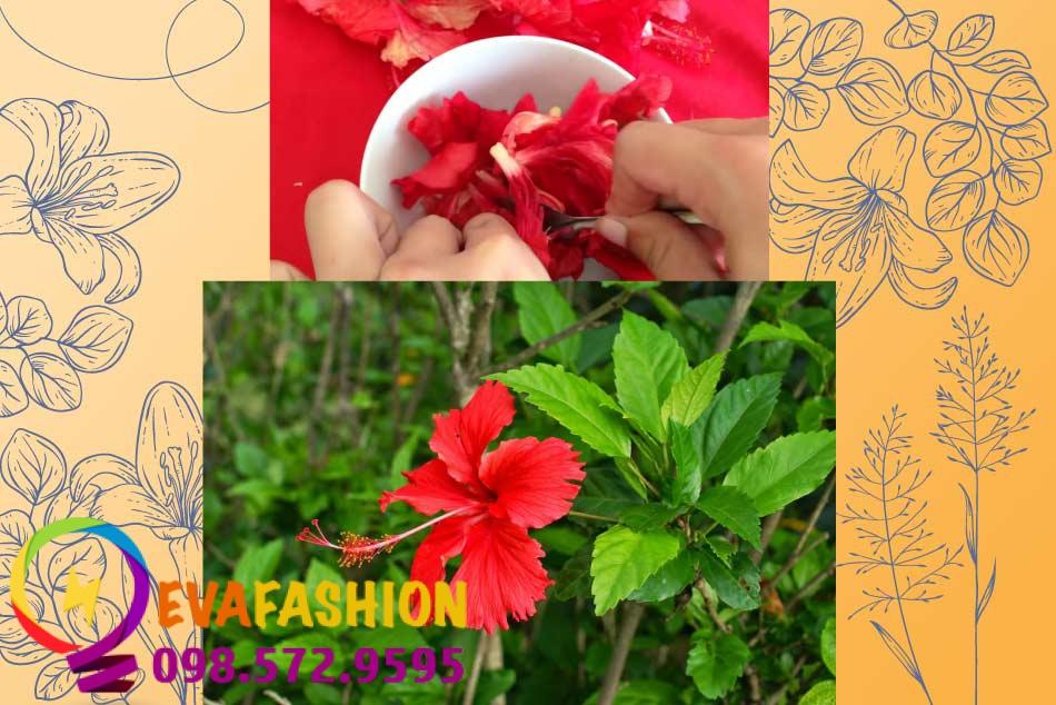 Bí quyết làm son môi từ hoa dâm bụt
