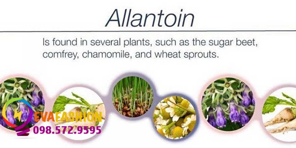 nguồn gốc Allantoin