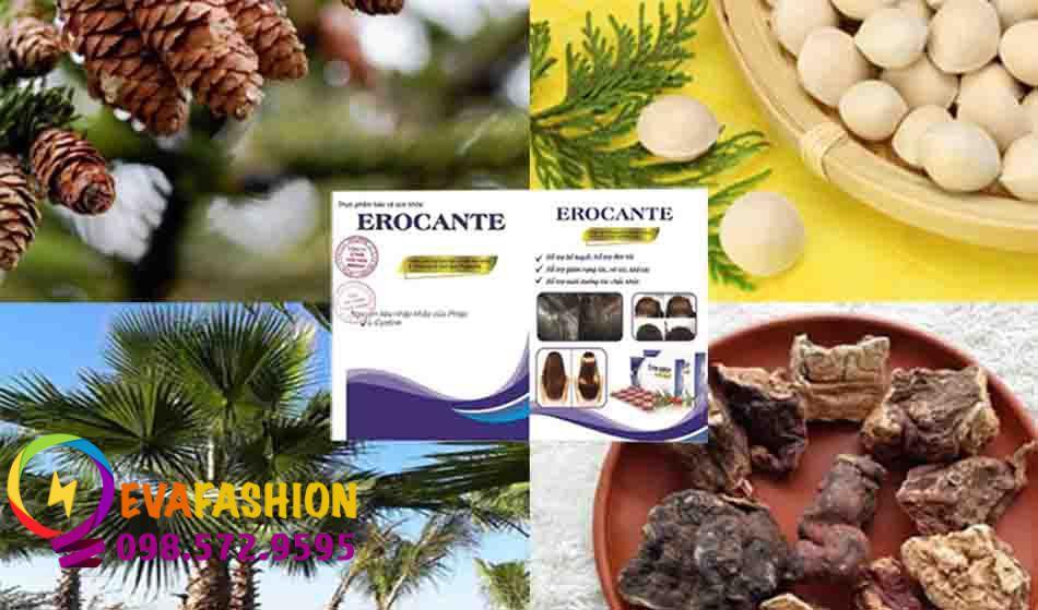 Thành phần viên uống Erocante